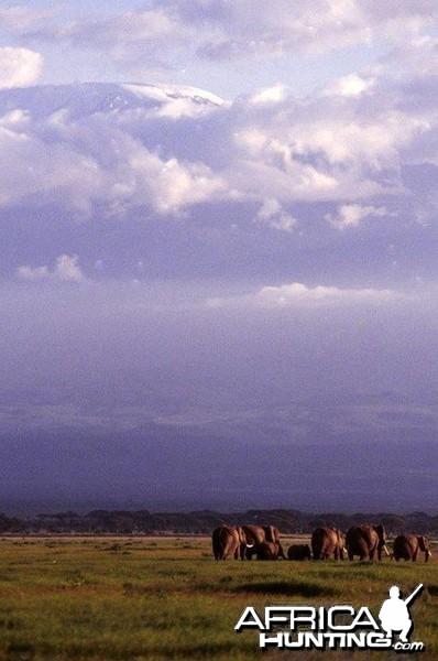 Kilimanjaro 1995 Elephants
