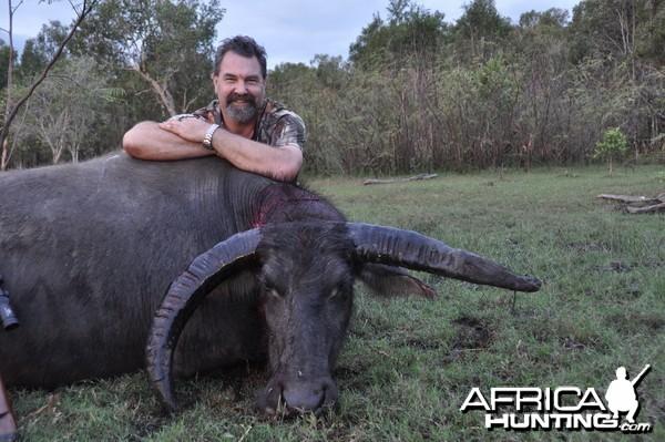 non typical water buffalo