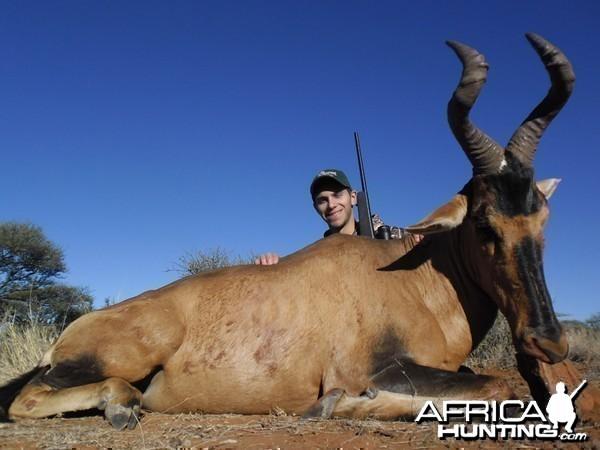 Hartebeest hunt with Wintershoek Johnny Vivier Safaris