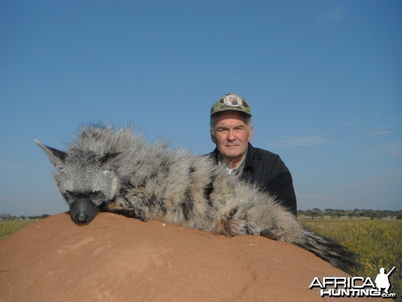 Aardwolf hunt with Wintershoek Johnny Vivier Safaris