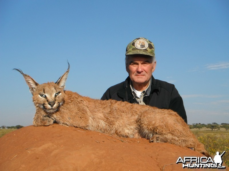 Caracal hunt with Wintershoek Johnny Vivier Safaris