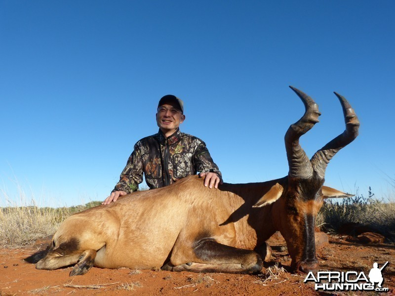 Hartebeest hunt with Wintershoek Johnny Vivier Safaris