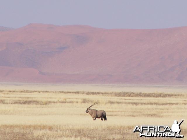 Gemsbok at Sossusvlei Namibia