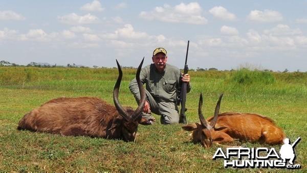Hunting Uganda East African Sitatunga and Nile Bushbuck