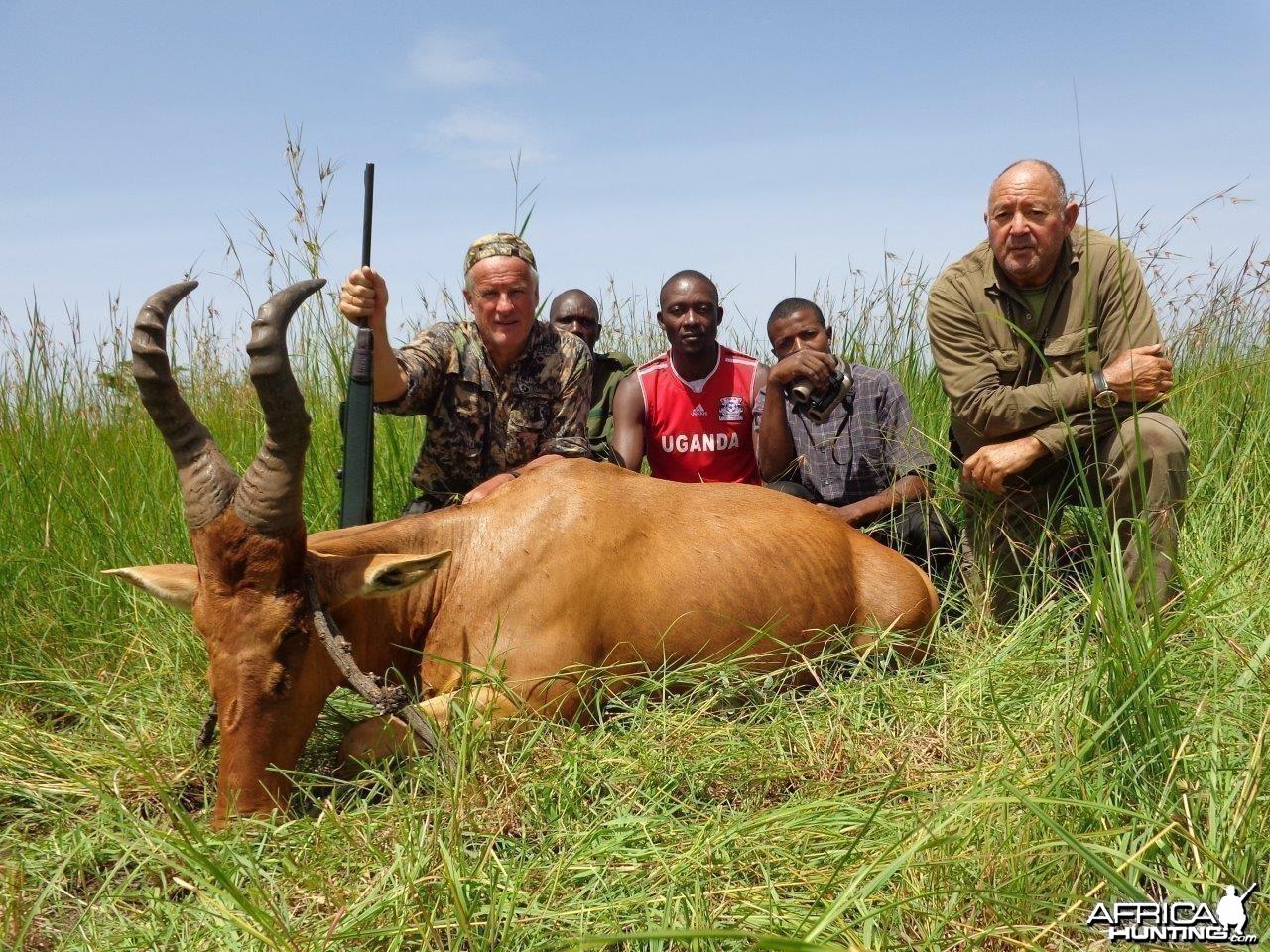 Hunting Uganda Jackson Hartebeest
