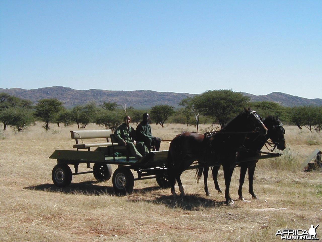 Horse-Drawn Carriage for Game Viewing
