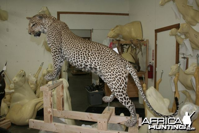 Full mount Leopard