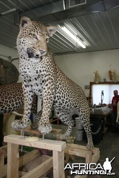 Full mount Leopard