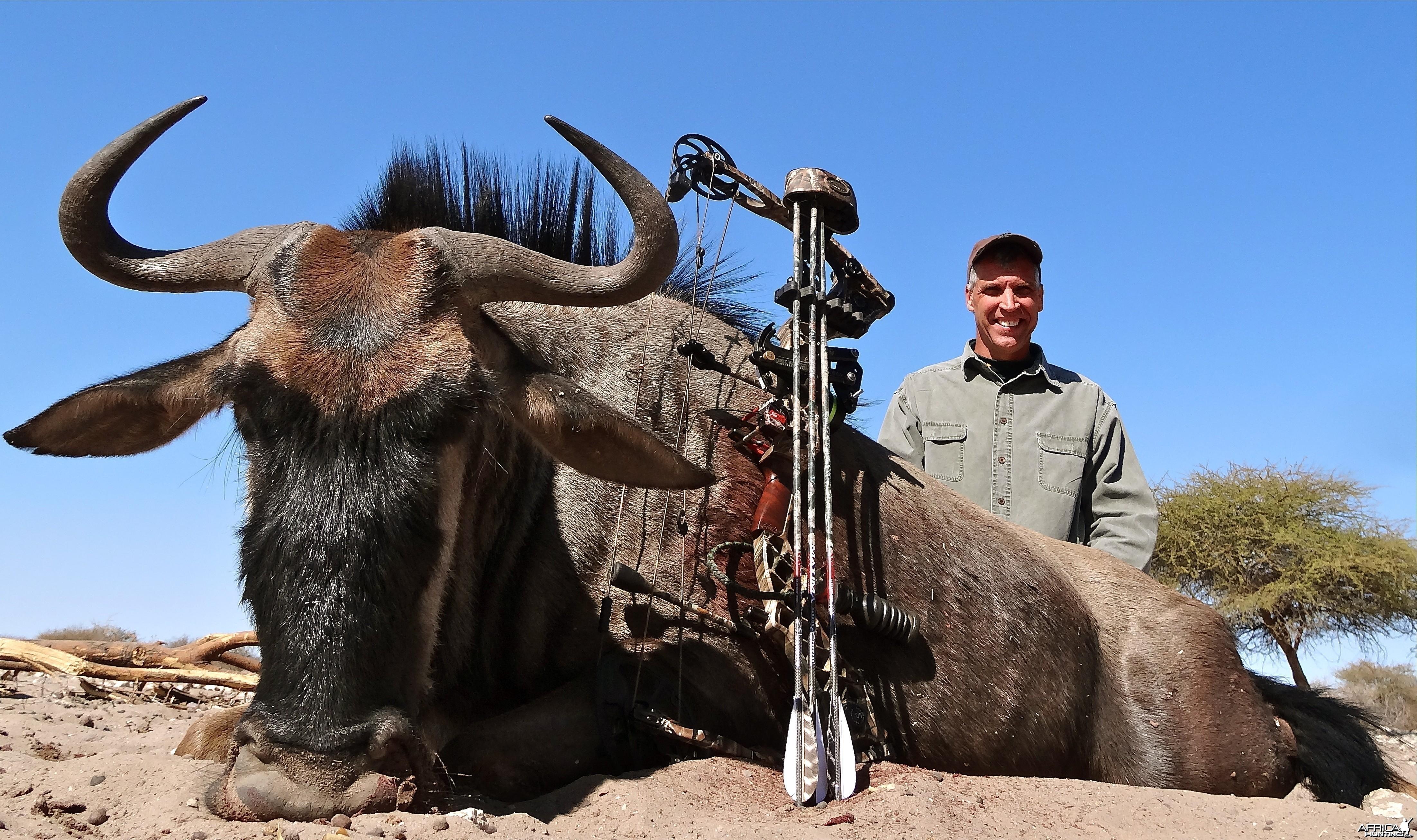 Blue Wildebeest Botswana 2013
