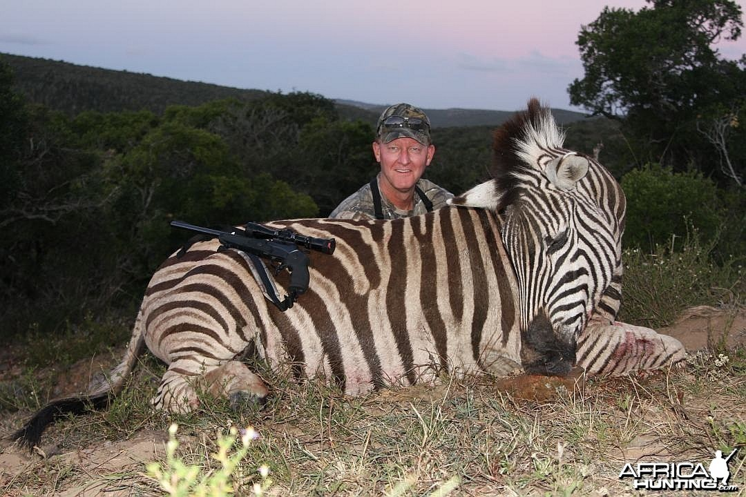 Zebra in the Eastern Cape