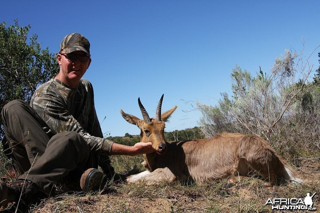 mature mountain reedbuck