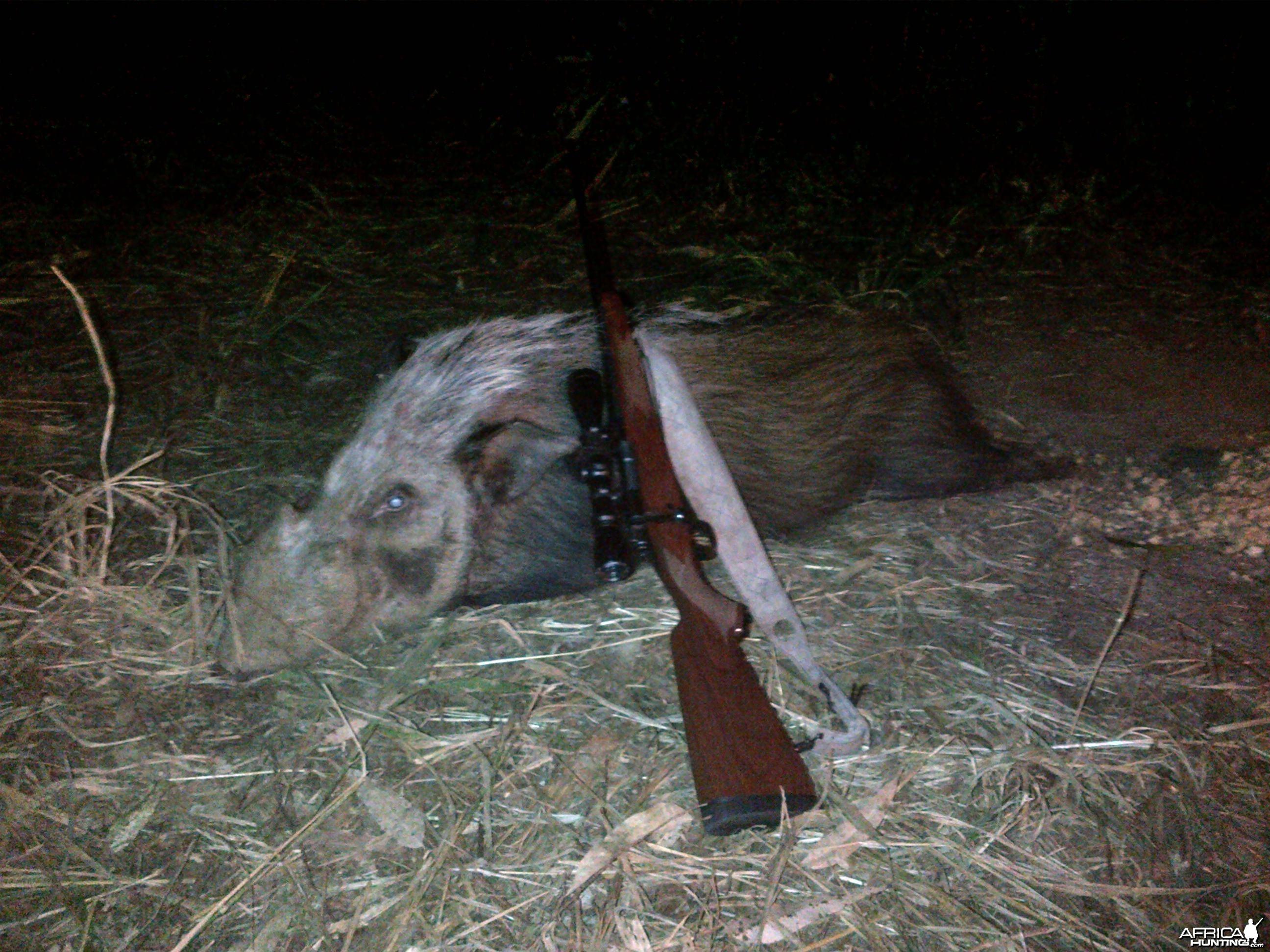 Bushpig Boar Winchester 300WM