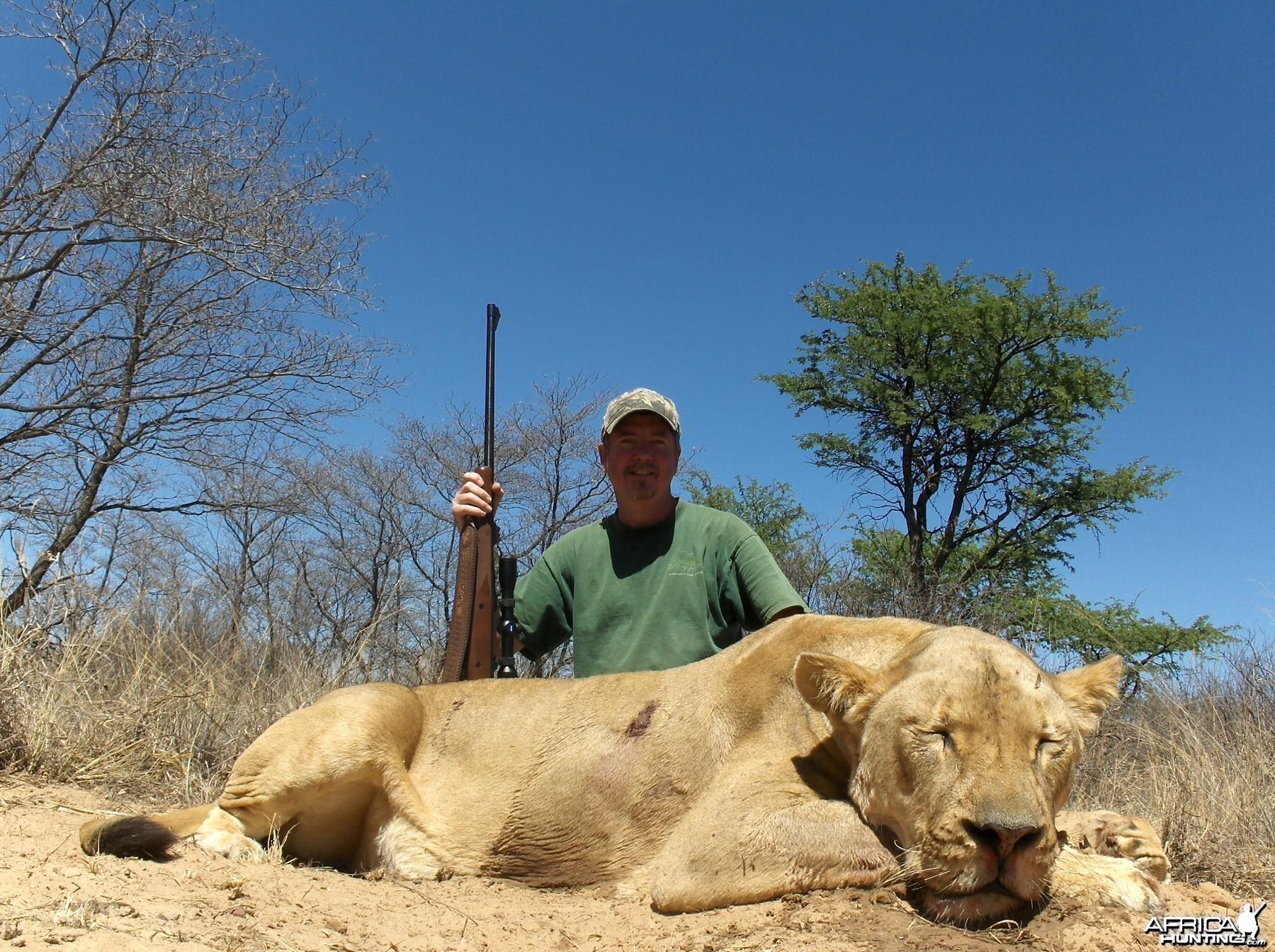 kalahari s.a. lioness