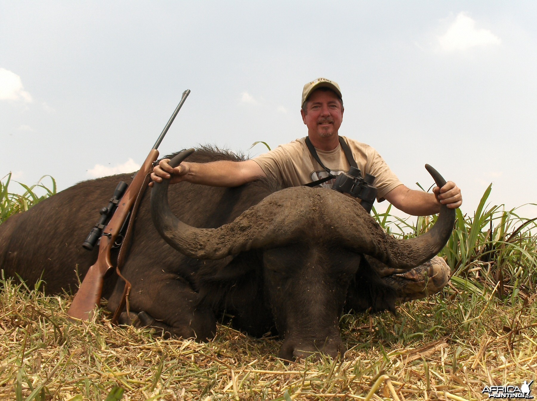 41'' mozambique cape buffalo