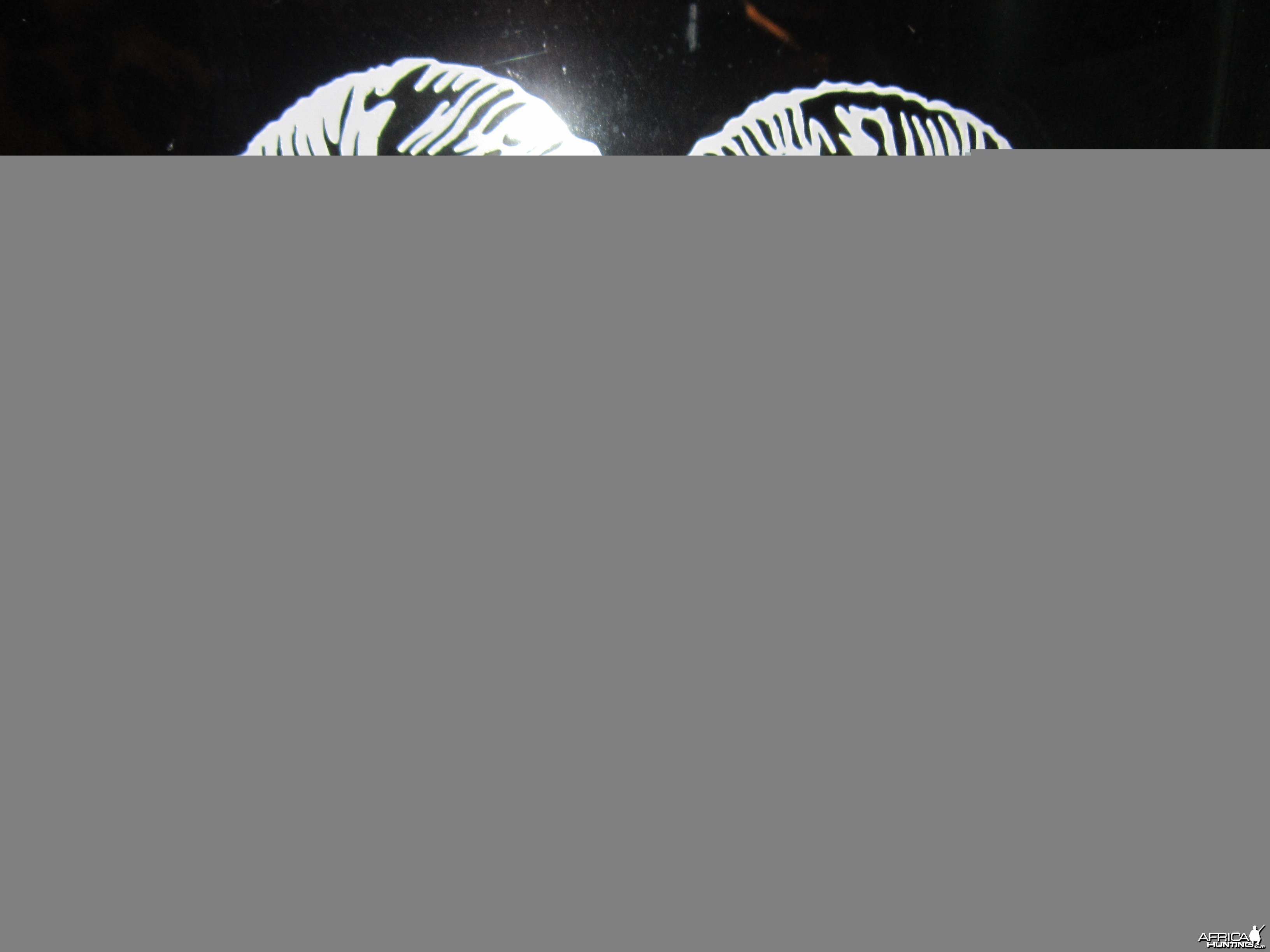 Mouflon Decal Stickers