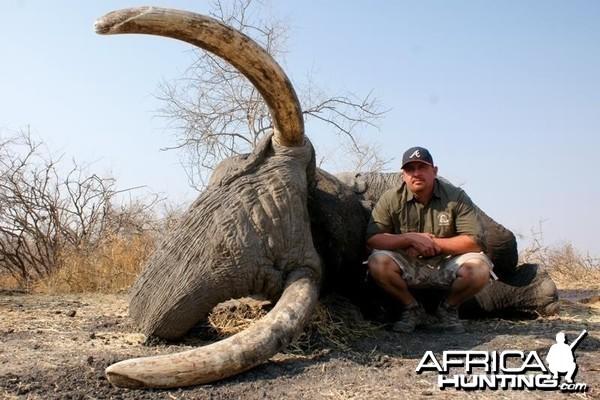 Elephant Botswana
