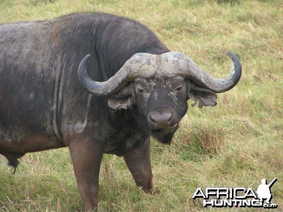 Global Rescue performs field rescue for woman gored by Cape buffalo in Zim
