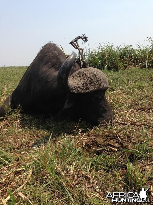 Buffalo Mozambique