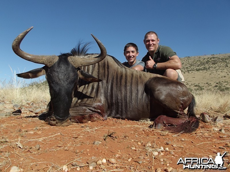 Blue Wildebeest hunt with Wintershoek Johnny Vivier Safaris
