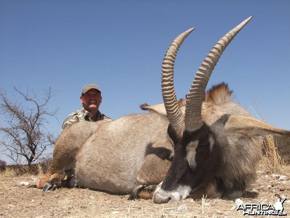 """27"""" Roan Antelope"""