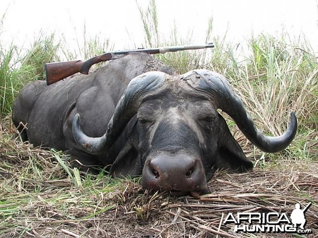 Hunting Cape Buffalo in Tanzania