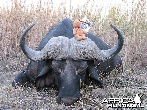 Hunting Cape Buffalo in Tanzania