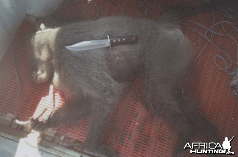baboon snipe