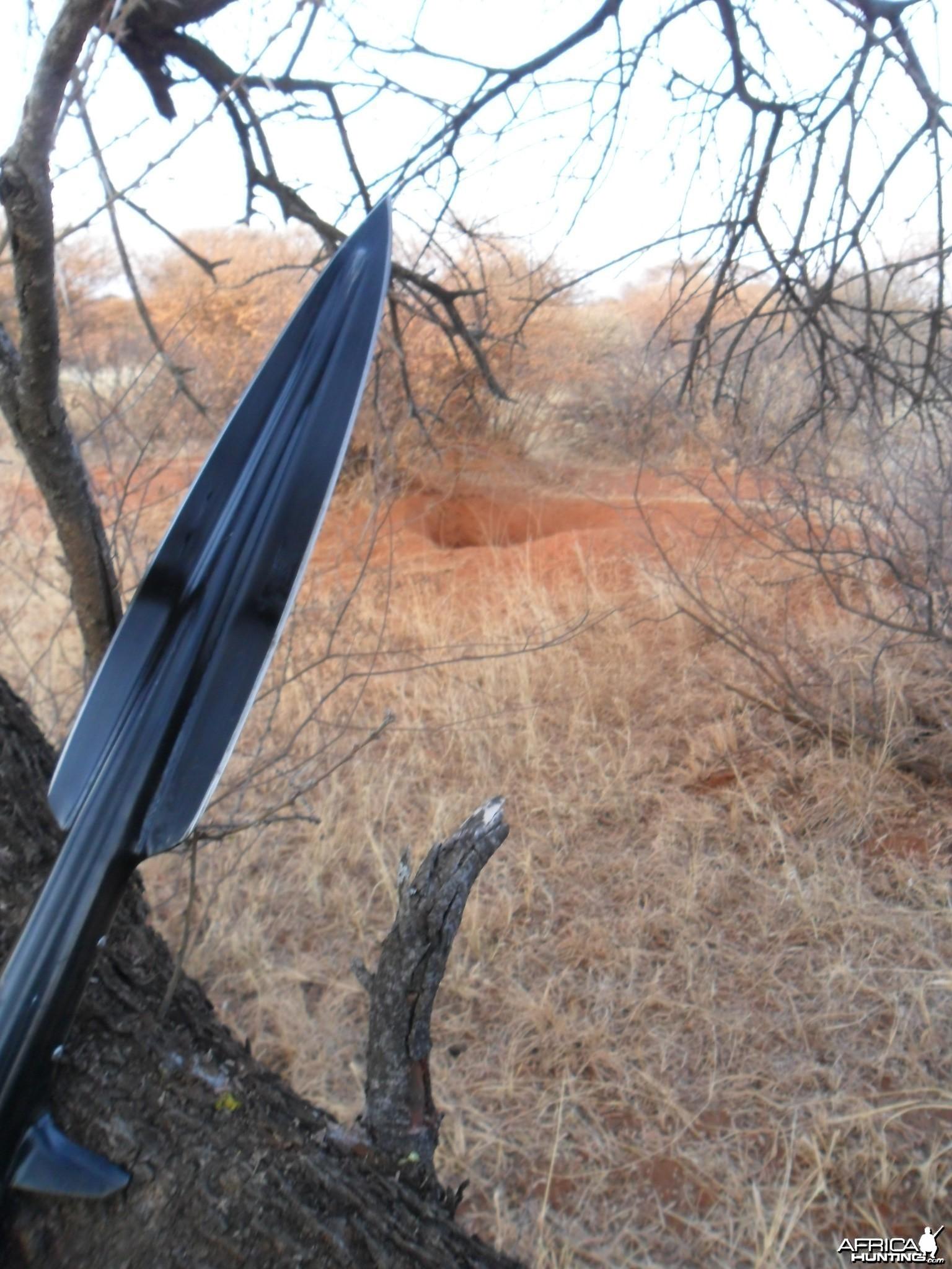 warthog spearhunting