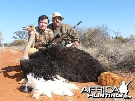 Ostrich hunt with Wintershoek Johnny Vivier Safaris