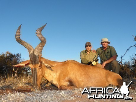 Red Hartebeest hunt with Wintershoek Johnny Vivier Safaris