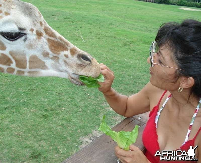 Giraffe and Me