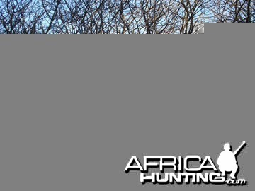 Hunting Waterbuck Namibia