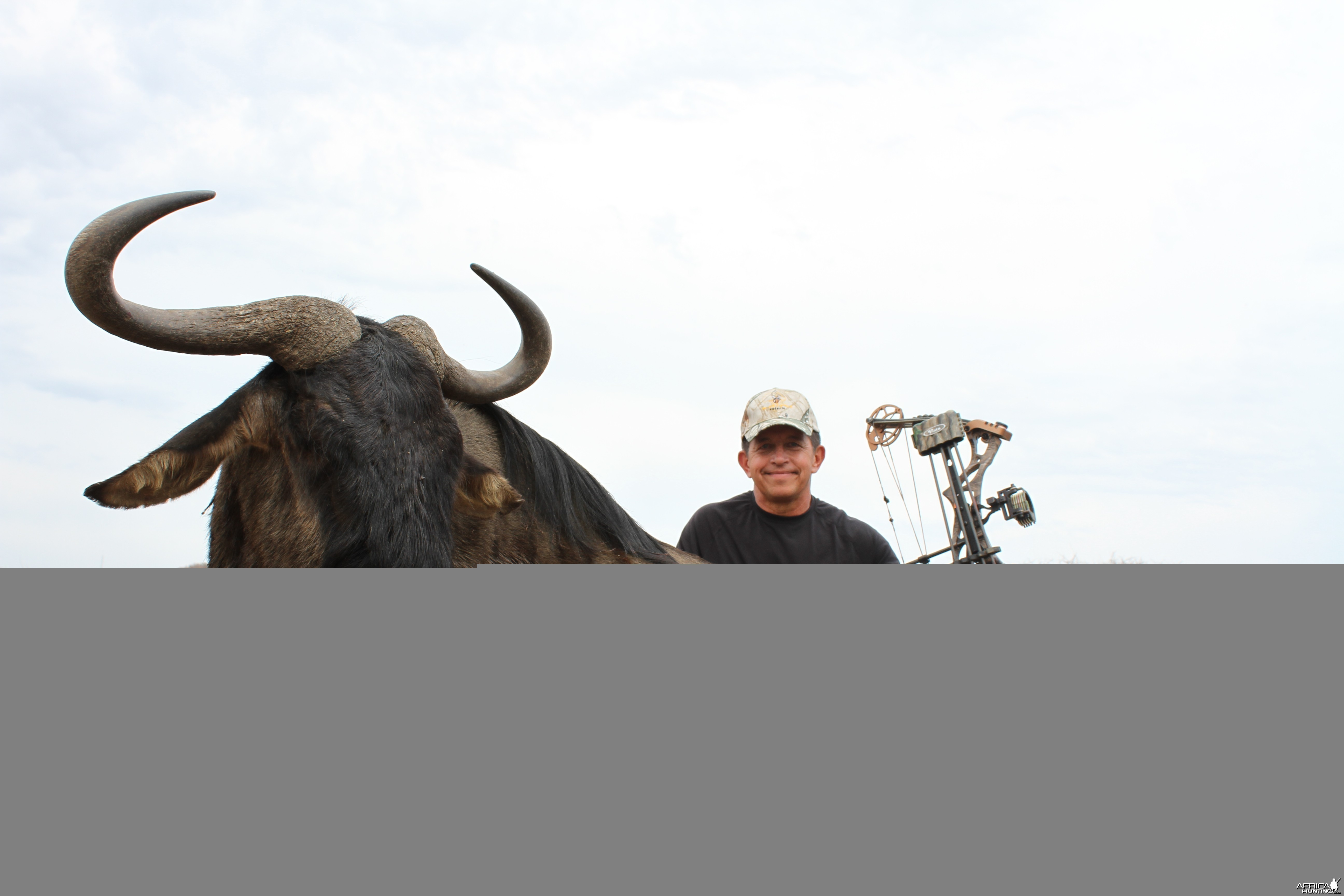 Blue Wildebeest SCI Gold 80 3/8 Bow
