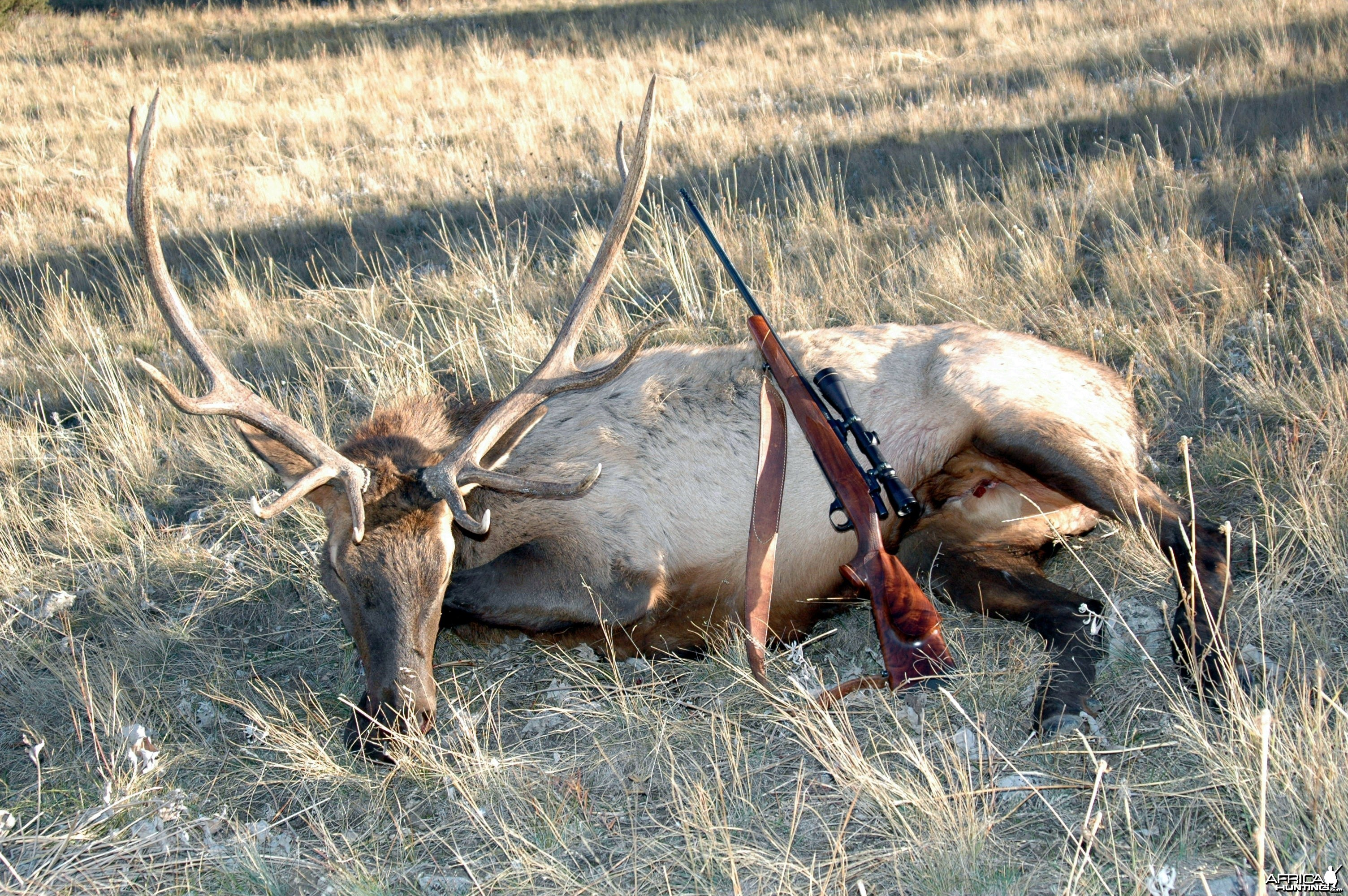 My 2013 Bull Elk and my .300 Weatherby