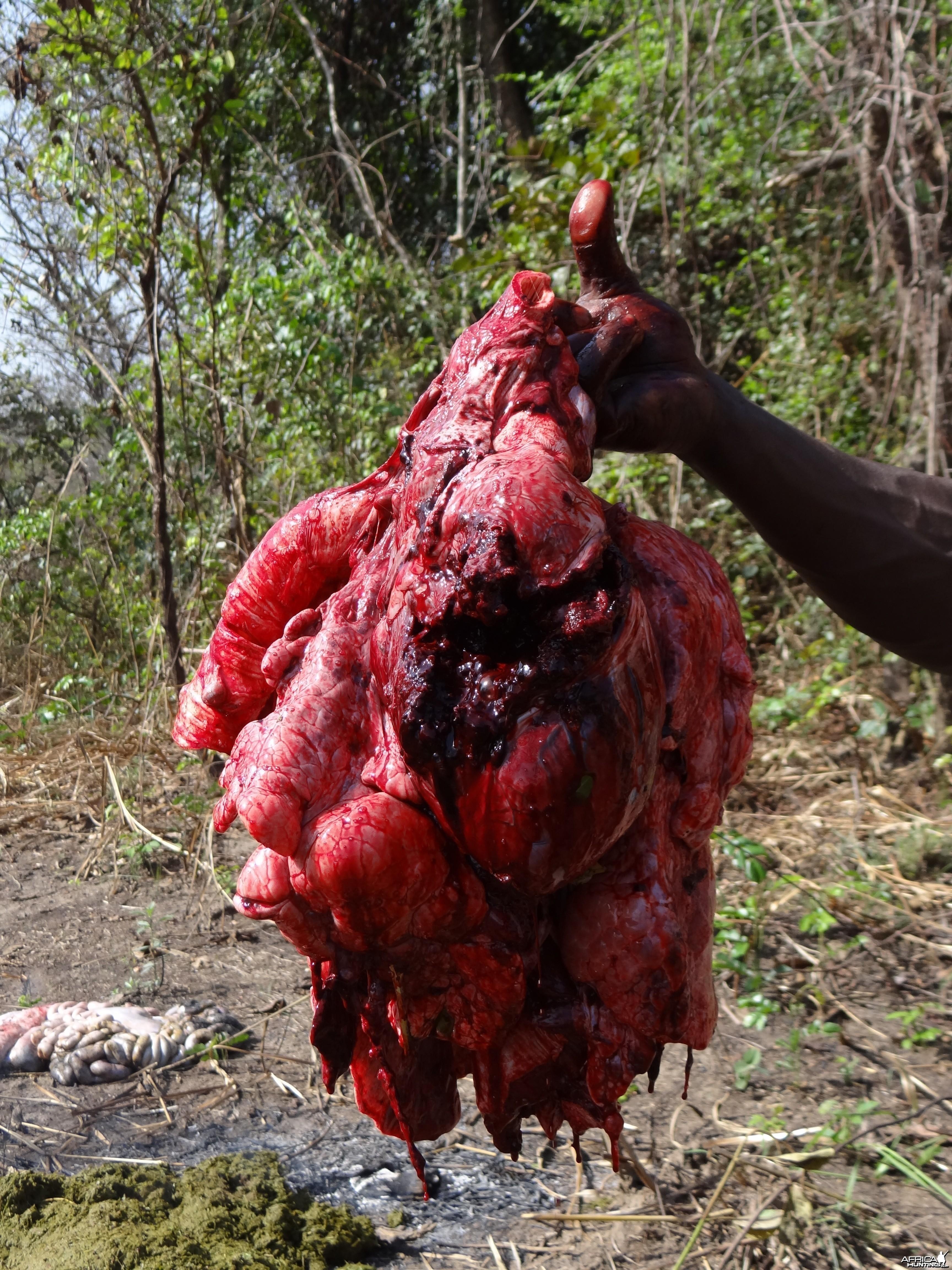 Buffalo vital organs