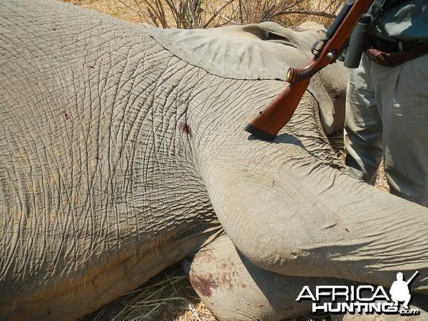 Third bull -Zimbabwe October 2013