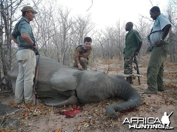 Fourth elephant - Zimbabwe October 2013