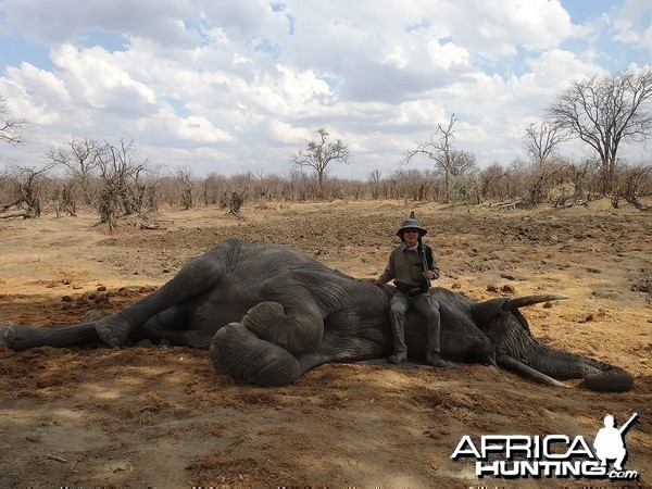 Eighth bull - Zimbabwe October 2013