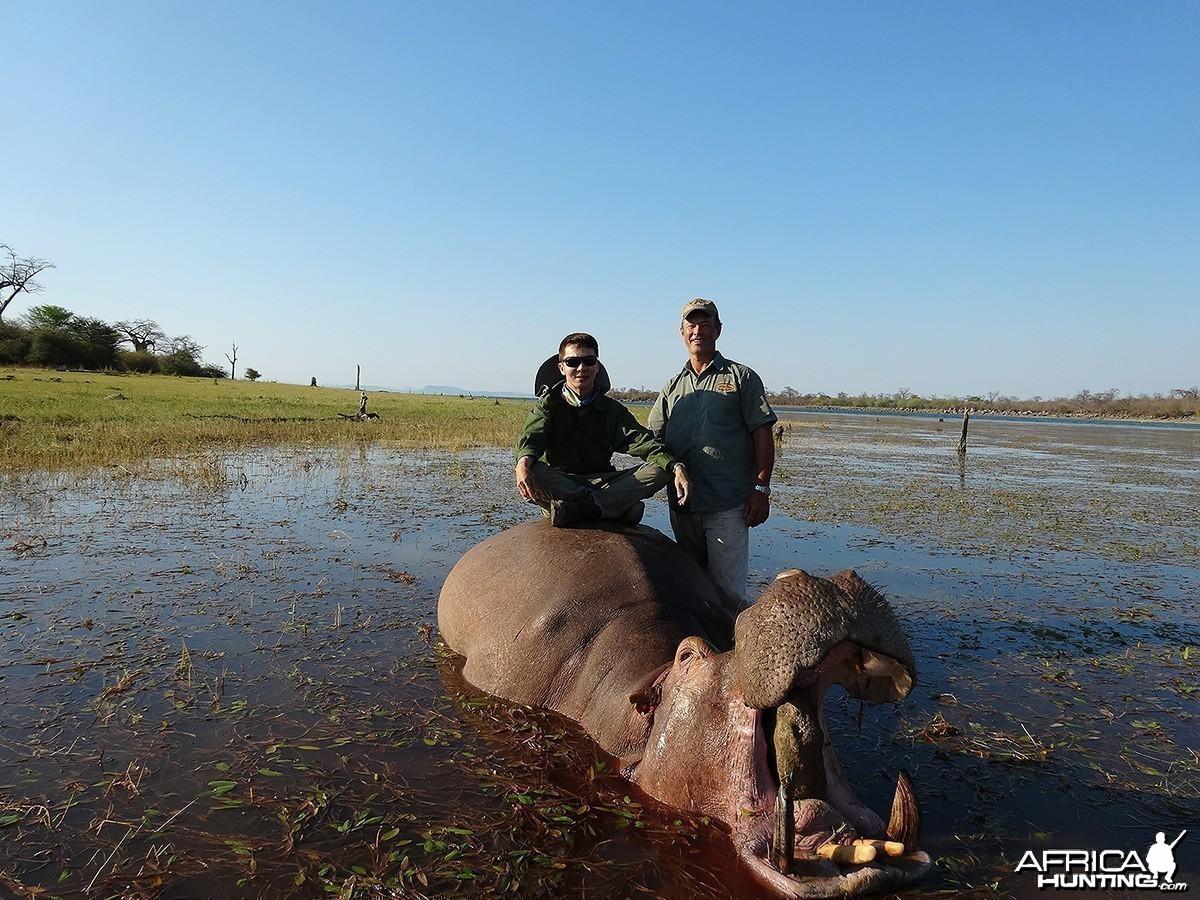 Second Hippo - Zimbabwe October 2013