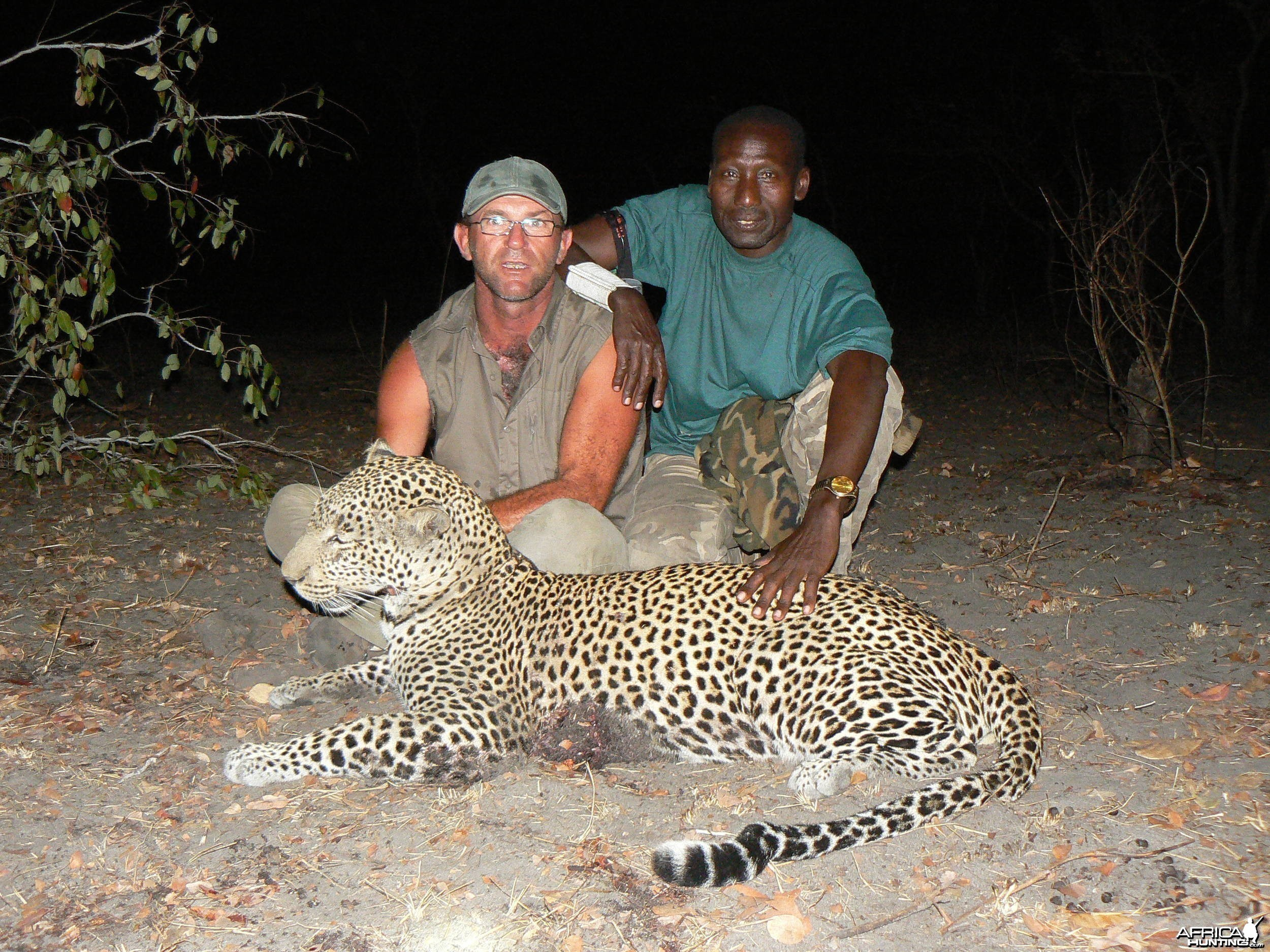 Very good Leopard (59 kg) from the Selous