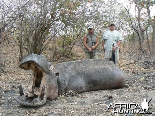 Very old hippo shot on land, Tanzania