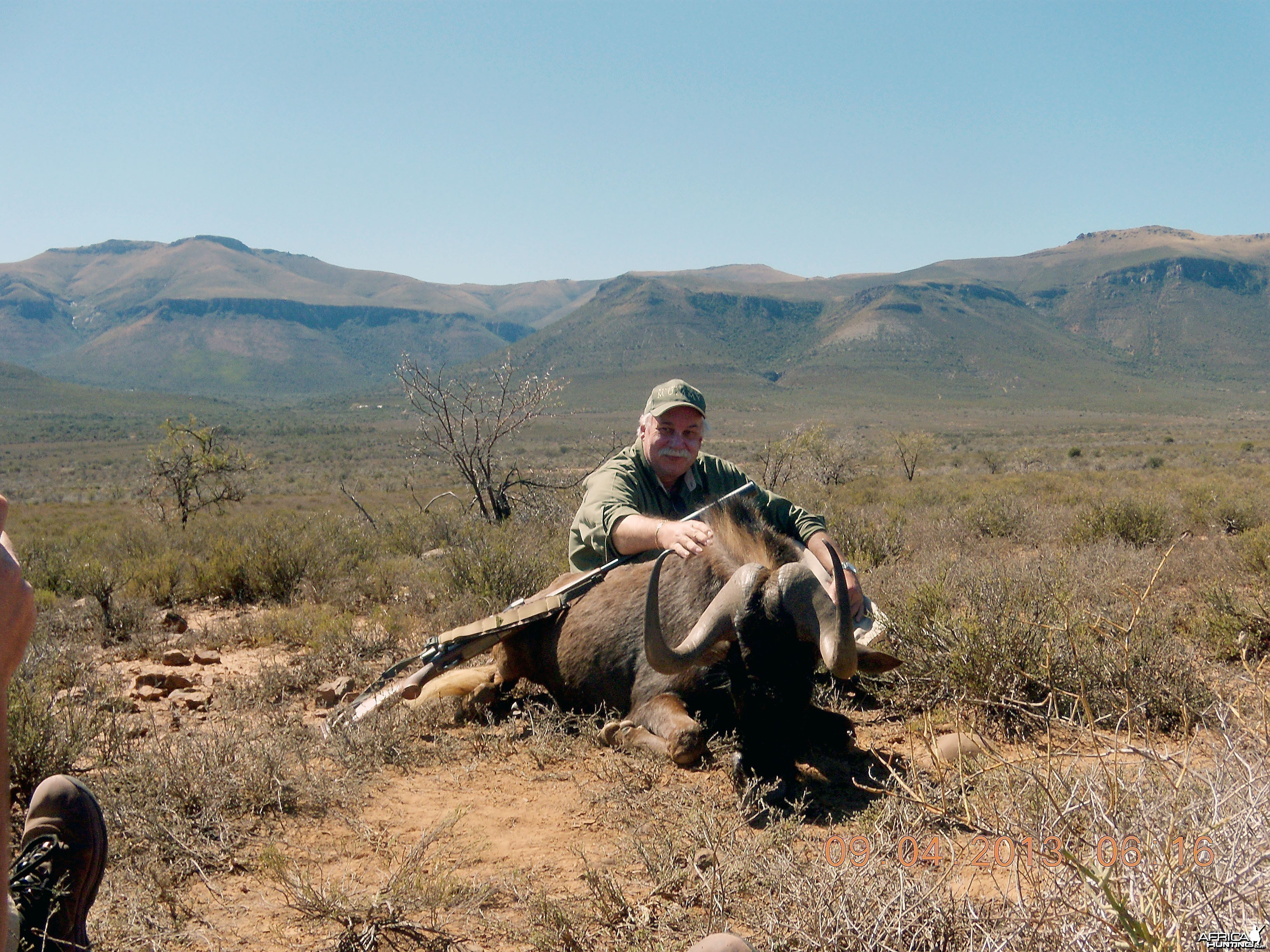 Black Wildebeest 3 for the books