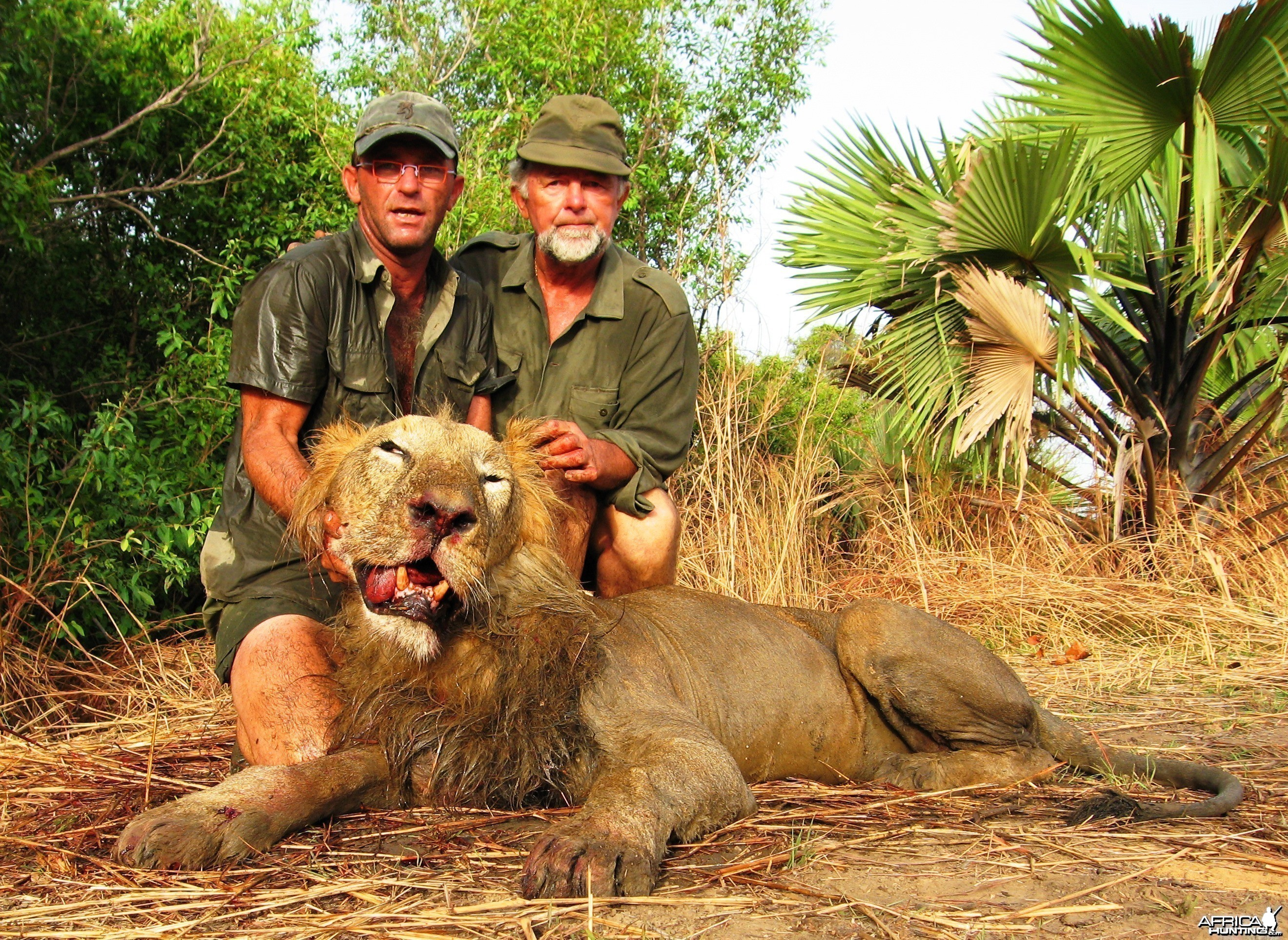 Lion hunted in Benin