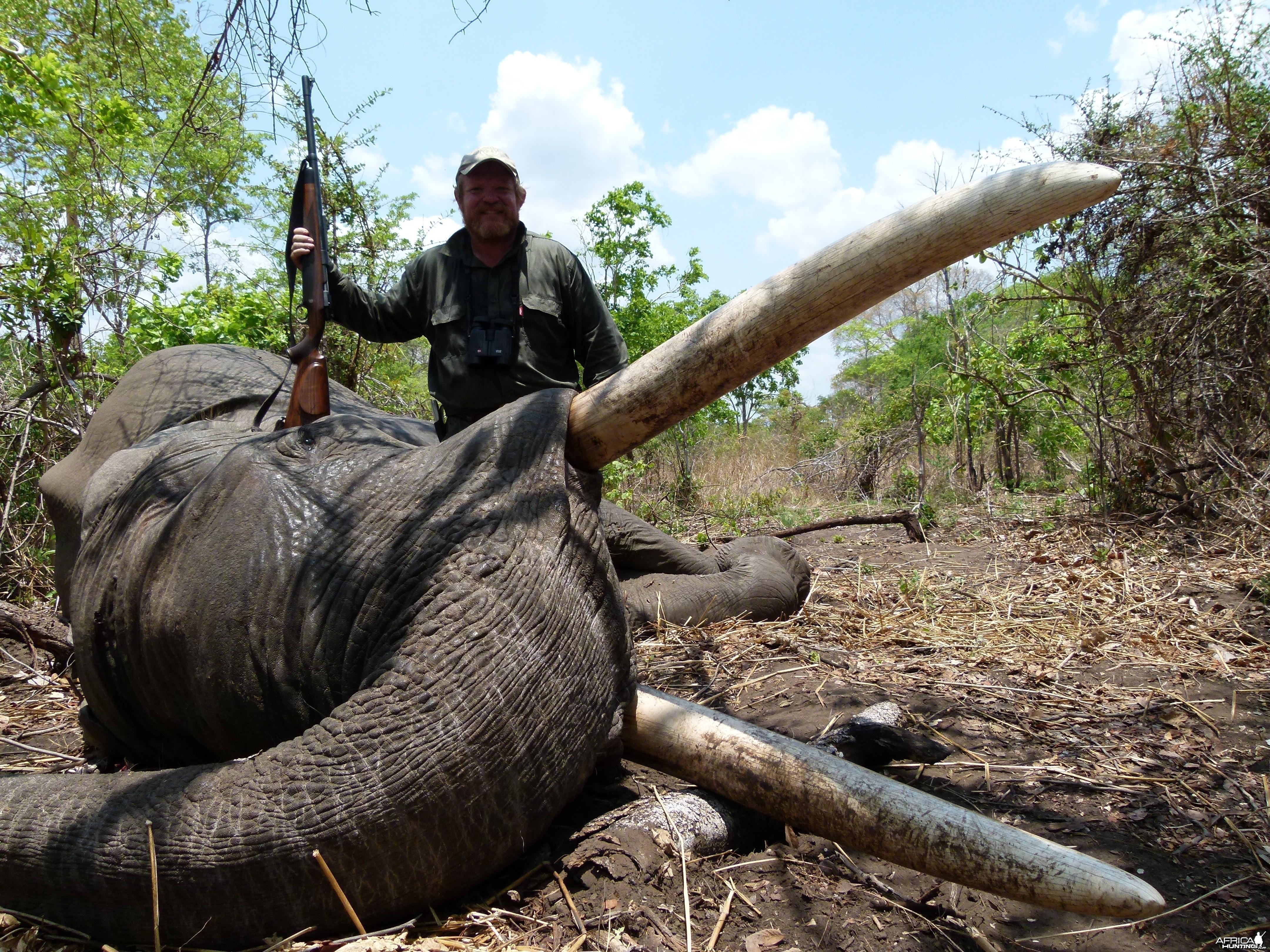 88 lbs Mozambique Elephant