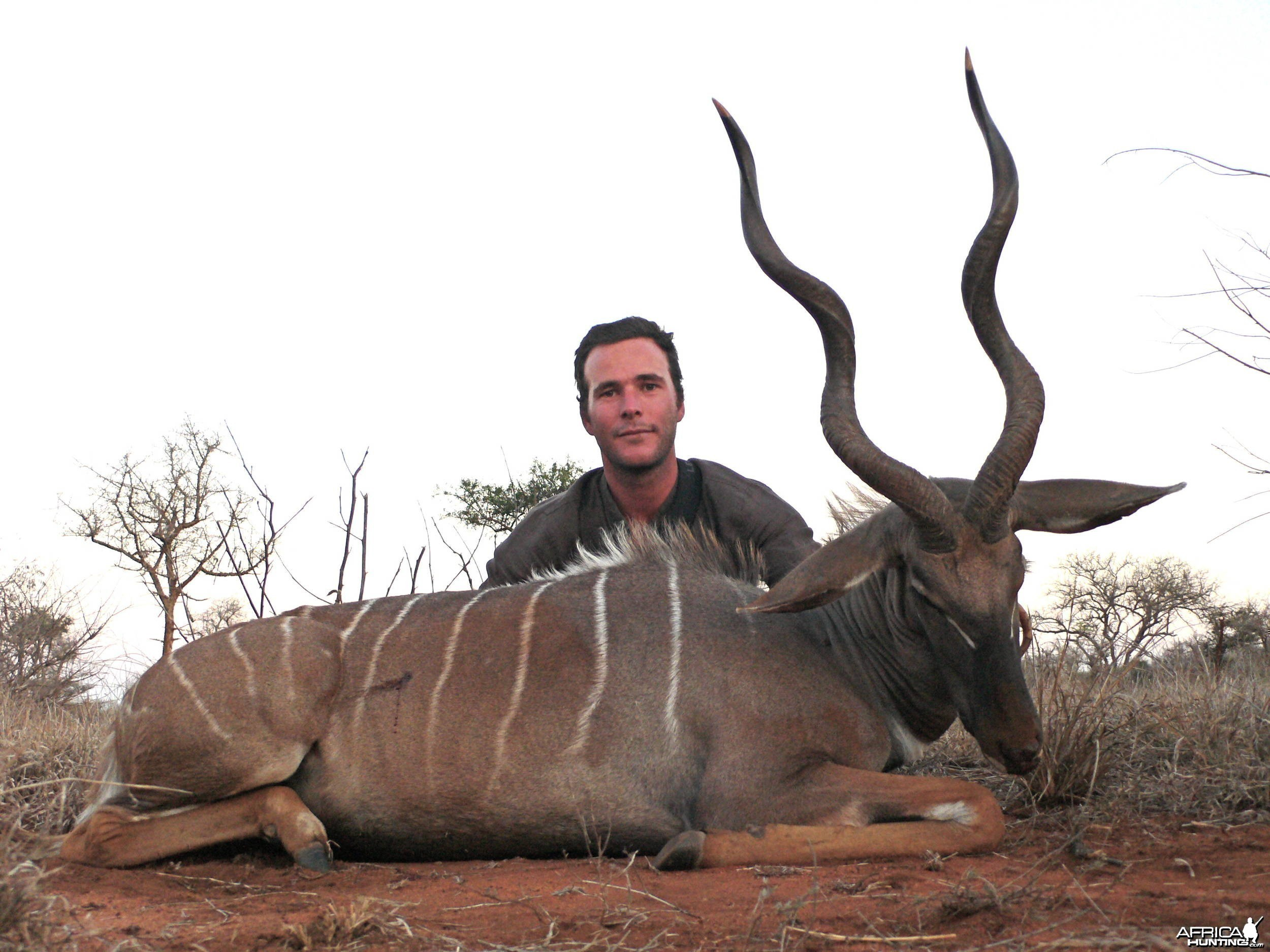 29'' Lesser Kudu from Massailand
