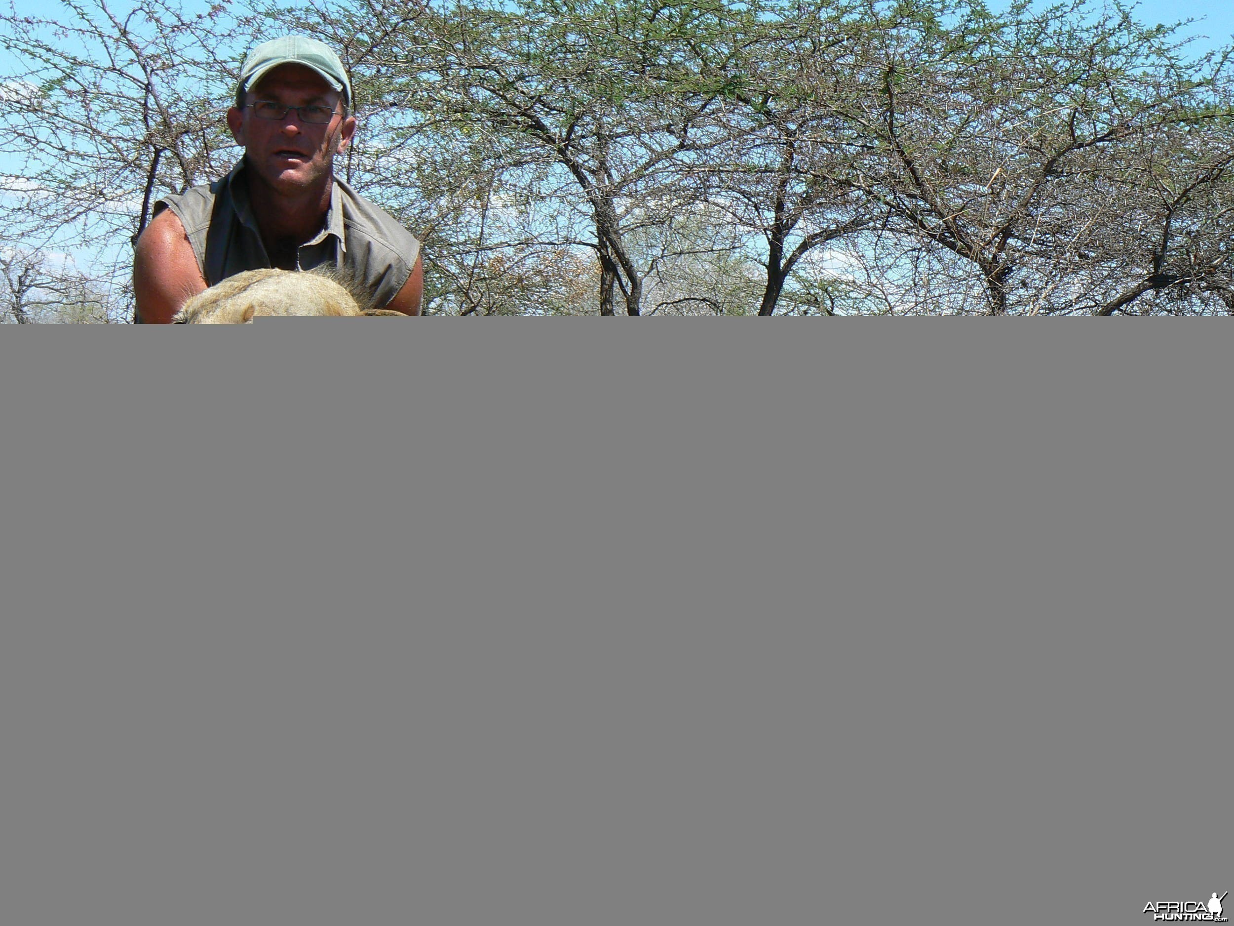 Old mainless lion from Selous Tanzania