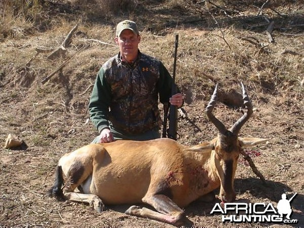 Hartebeest South Africa