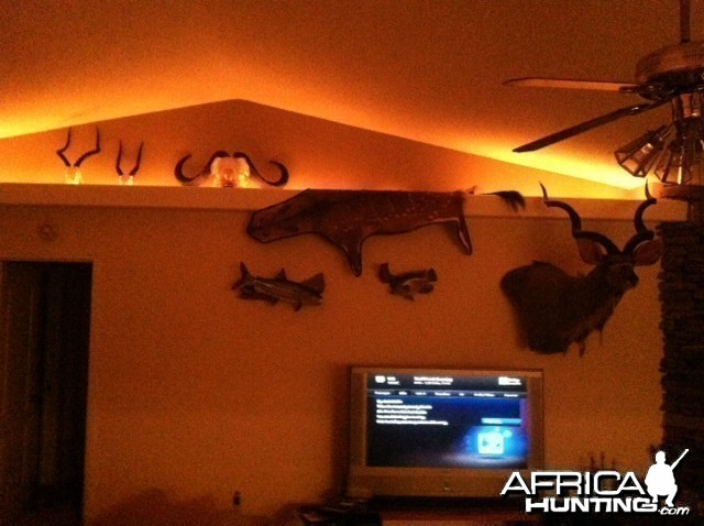 Africa Mounts and Hides