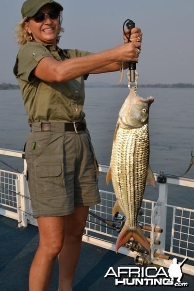 Ann 11 lb Tigerfish