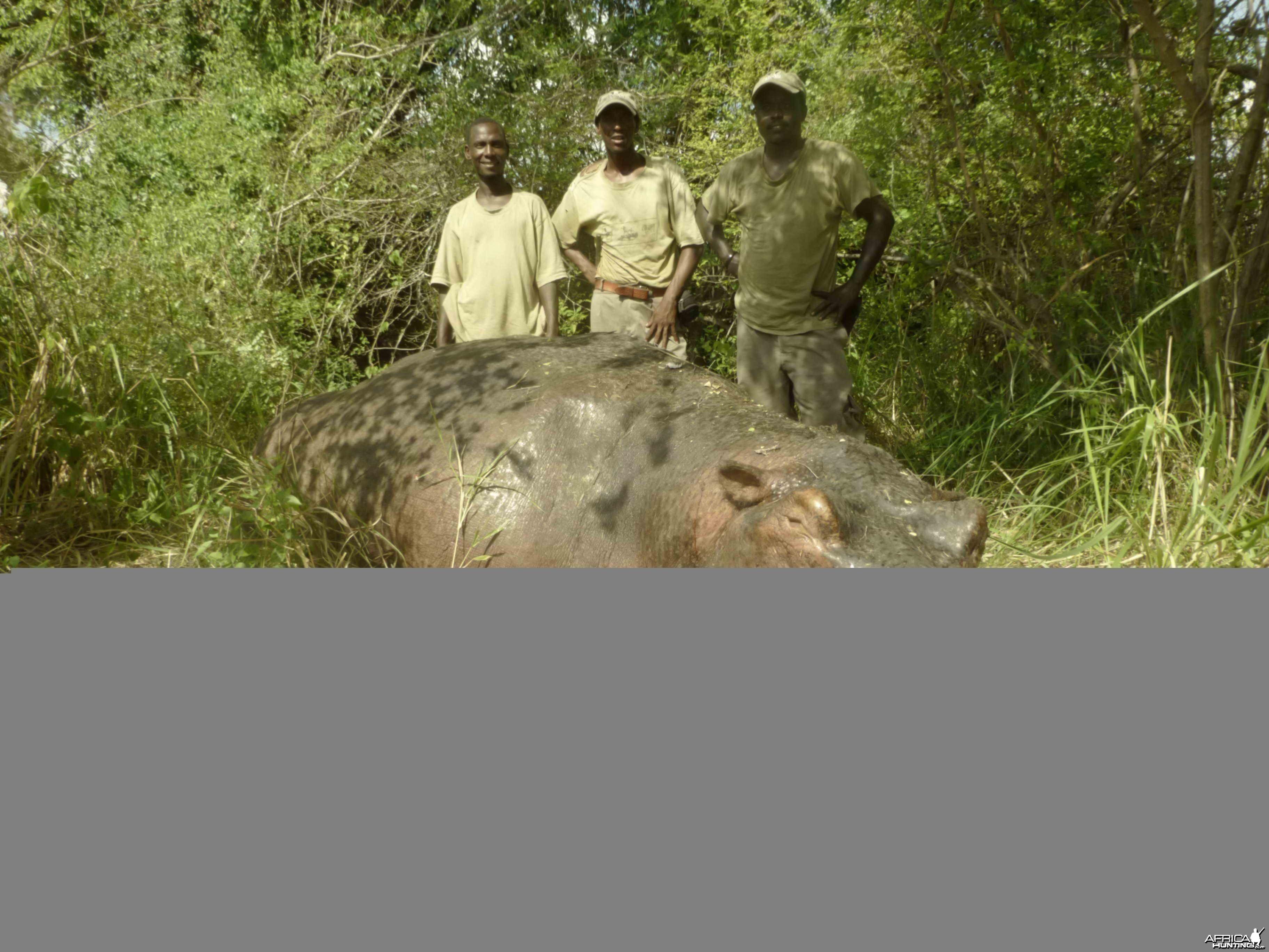 Hippo Selous